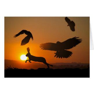 Harris Hawks Hunting card