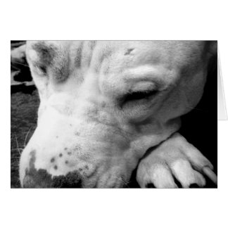 harry potter scar dog white pit bull card