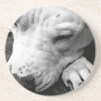 harry potter scar dog white pit bull drink coasters