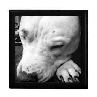 harry potter scar dog white pit bull jewelry boxes