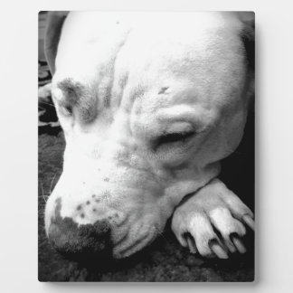harry potter scar dog white pit bull plaque
