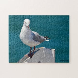 Hartlaub's Gull Jigsaw Puzzle