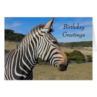 Hartmann's Zebra Portrait Birthday Card