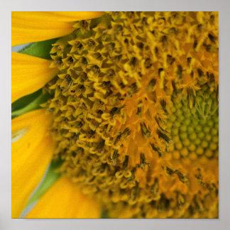 Harvest Flower print