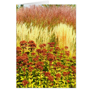 Harvest Note Card Collection