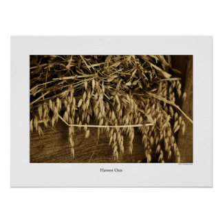 Harvest Oats Poster