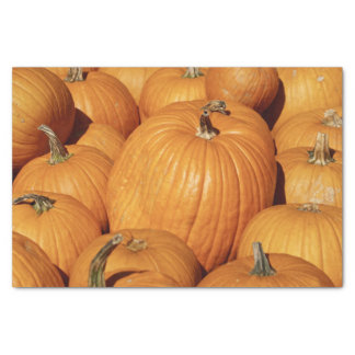 Harvest of Pumpkins Tissue Paper