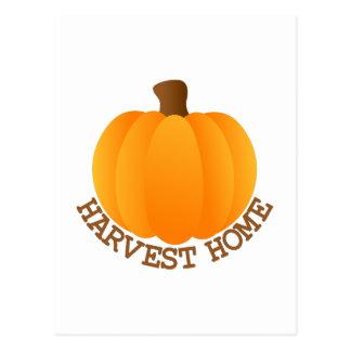 Harvest Pumpkin Postcard