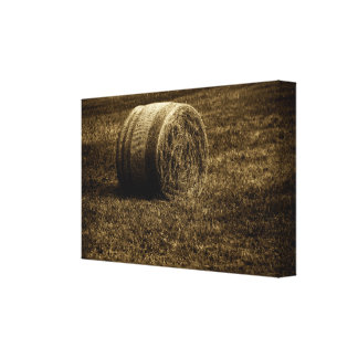Harvested Canvas Print