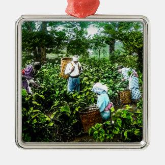 Harvesting Green Tea Leaves Old Japan Farmers Metal Ornament