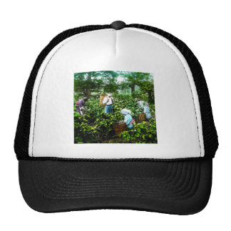 Harvesting Green Tea Leaves Old Japan Farmers Trucker Hat