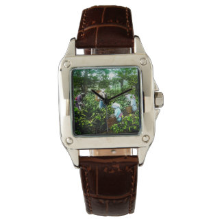 Harvesting Green Tea Leaves Old Japan Farmers Wristwatches