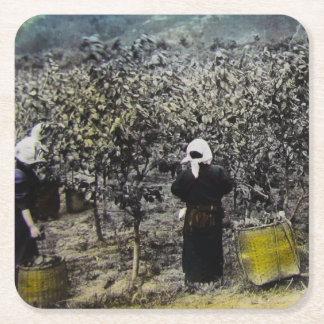 Harvesting Silk in Old Japan Vintage Japanese Farm Square Paper Coaster