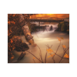 Hat Creek in Gold Canvas Print