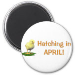 Hatching in April! Maternity/Pregnant Due In April