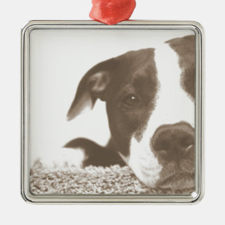 hate the deed not the breed friendly pitbull sepia metal ornament