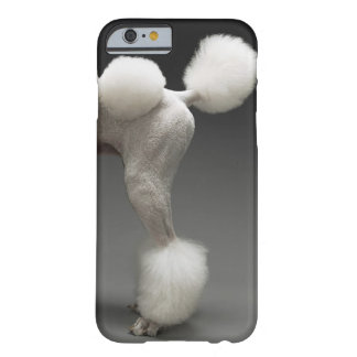 Haunches of Poodle, on grey background Barely There iPhone 6 Case