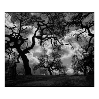 Haunting Black and White Trees Poster