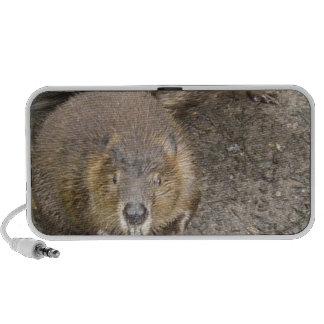 Haut-parleurs de Portable de conception de castor