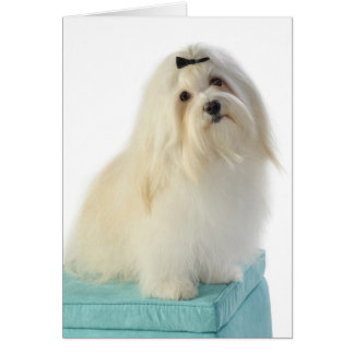 Havanese Cards & Gifts