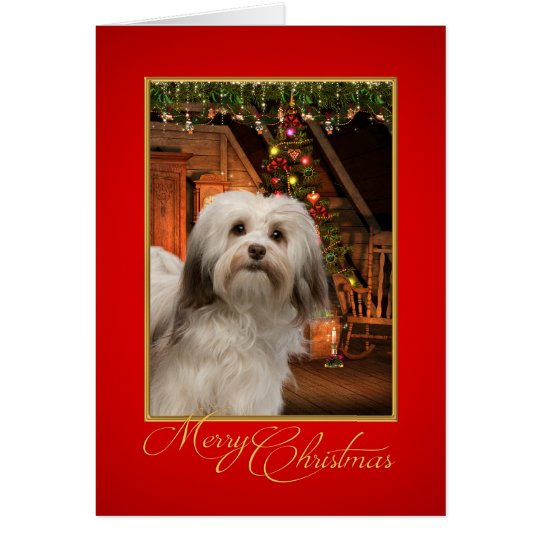 Havanese Christmas Card