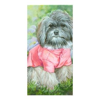 Havanese Dog in Pink Coat Art Photo Card