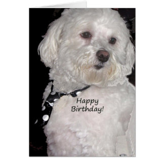 Havanese Happy Birthday Card