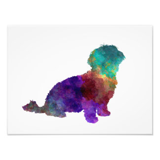 Havanese in watercolor art photo