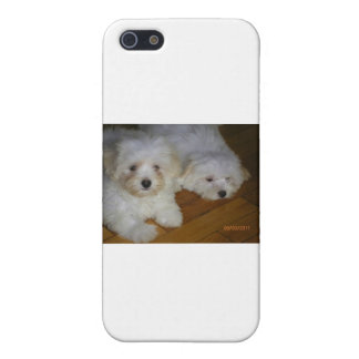 Havanese iPhone 5/5S Cases