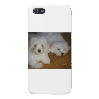 Havanese iPhone 5 Cases