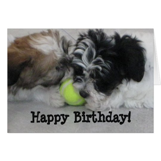 Havanese Puppies Happy Birthday Card