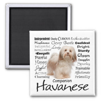 Havanese Traits Magnet