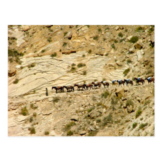 Havasu Canyon Pack Train Postcard