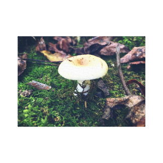have a shroom canvas print