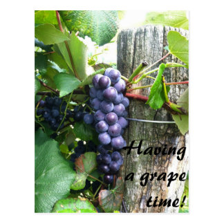 having a great grape time vineyard winery postcard
