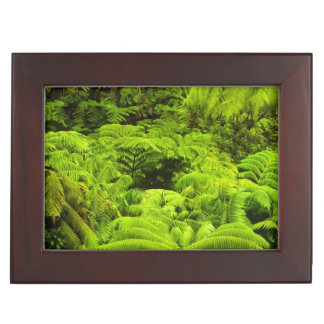 Hawaii, Big Island, Lush tropical greenery in Keepsake Boxes