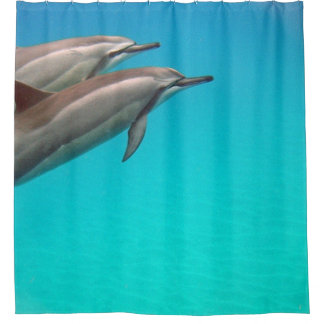 Hawaii Dolphins