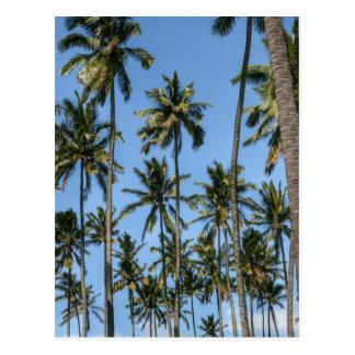Hawaii Island Travel Exotic Beach Palm Trees Postcard