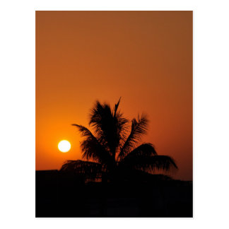 Hawaii Island Travel Tour Beach Sunset Palm Tree Postcard