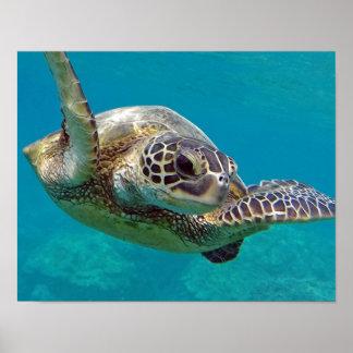 Hawaii Islands Sea Turtle Poster