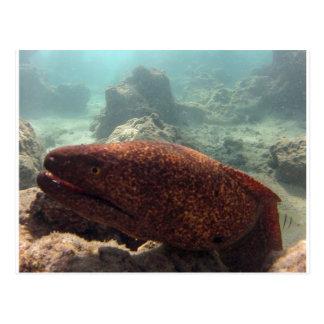 Hawaii Moray Eel Postcard