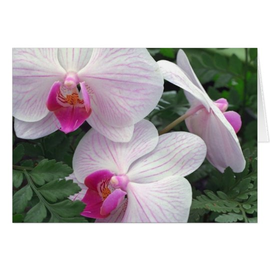 Hawaii-orchids Card