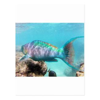 Hawaii Parrot Fish Postcard