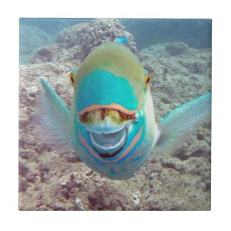 Hawaii Parrot Fish Tiles