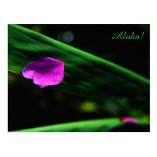 Hawaii-- Plumeria Flower Petal on Leaf Postcard