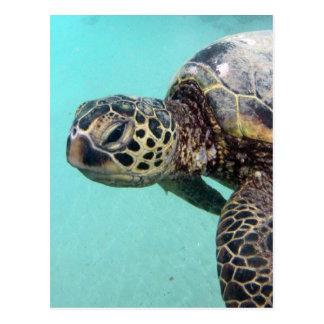 Hawaii Sea Turtle Postcard