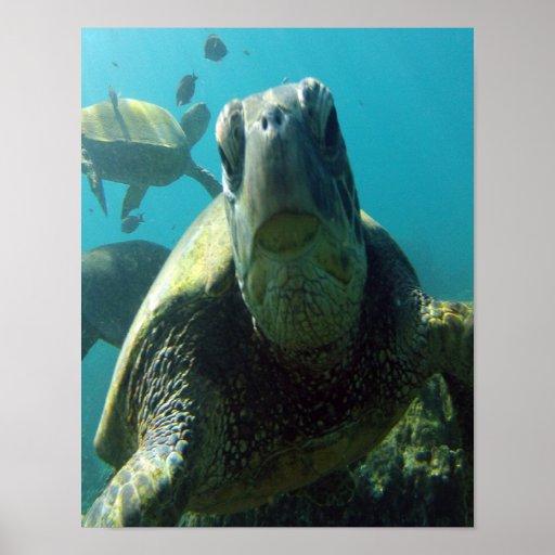 Hawaii Sea Turtle Print