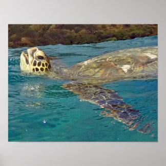 Hawaii Sea Turtle Posters