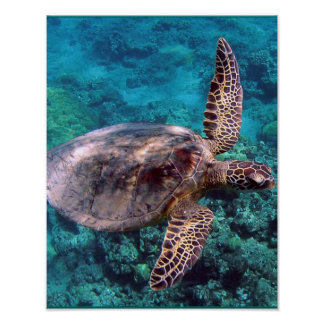 Hawaii Sea Turtle Poster