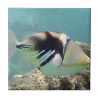 Hawaii State Fish - Humuhumunukunukuapua'a Tile
